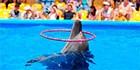 Дельфинарий хочет остаться в Бердянске еще на 49 лет