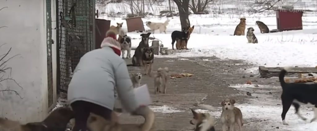 """Сюжет 1+1 про """"собачий конфликт"""" в Бердянске"""