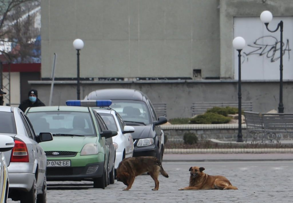 Чисельність безпритульних тварин в Бердянську продовжать регулювати через стерилізацію