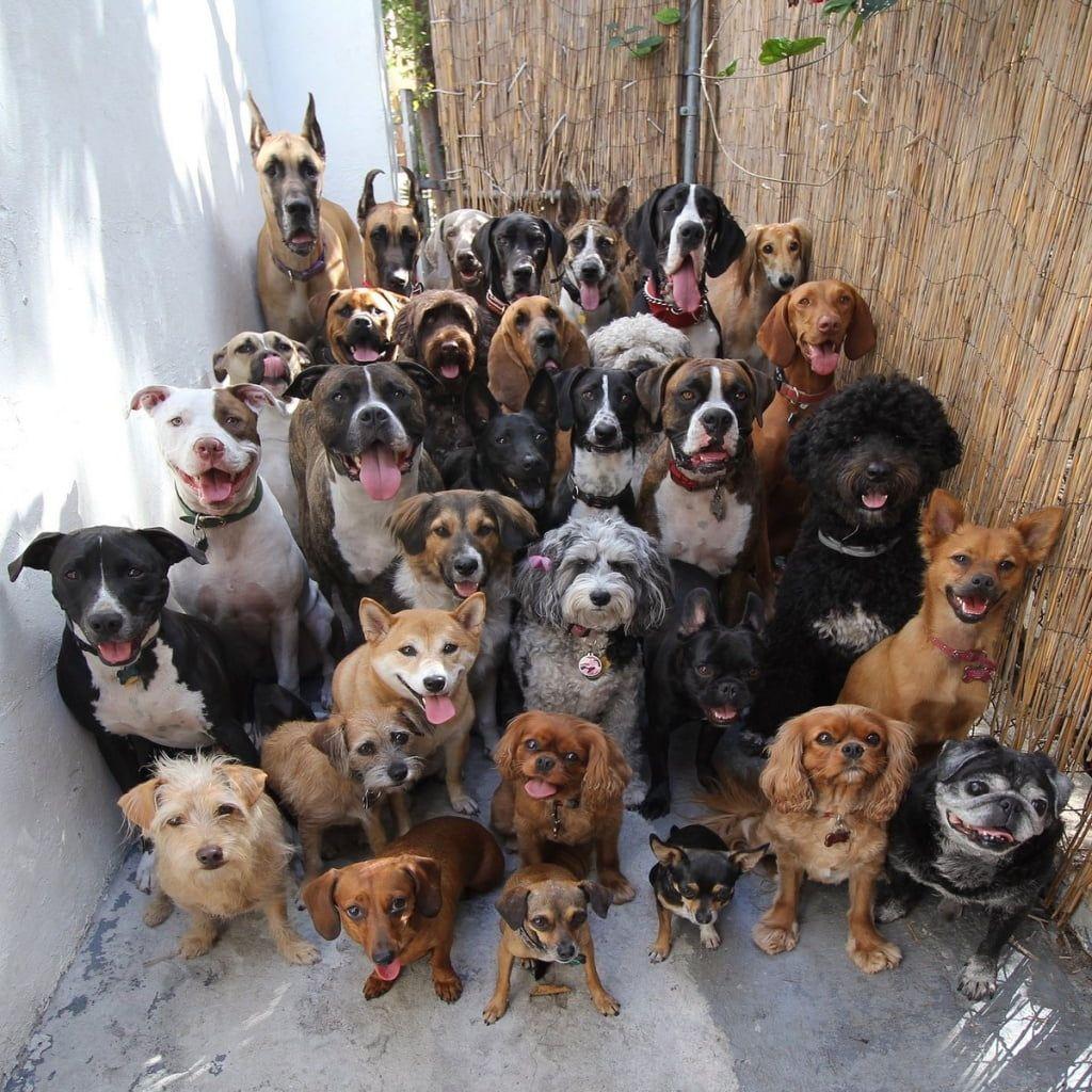 Виконком скасував штраф за утримання в помешканні 16 тварин