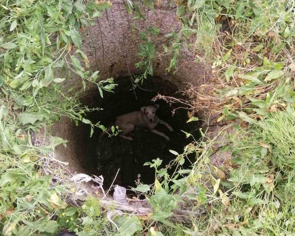 В Бердянську бійці ДСНС врятували собаку, яка впала у колодязь