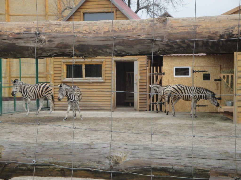 В Бердянский зоопарк Сафари приехали новые питомцы