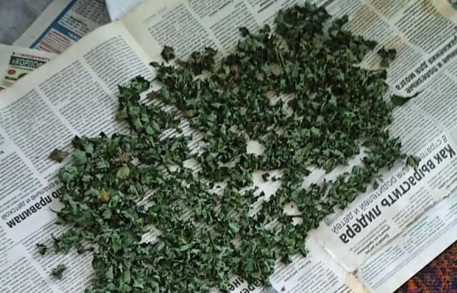 У Бердянську працівники поліції ліквідували насадження конопель, які житель міста вирощував за місцем проживання