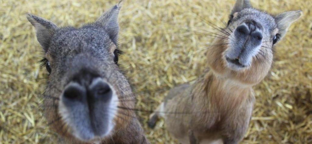 Зоопарк «Сафарі» запрошує волонтерів