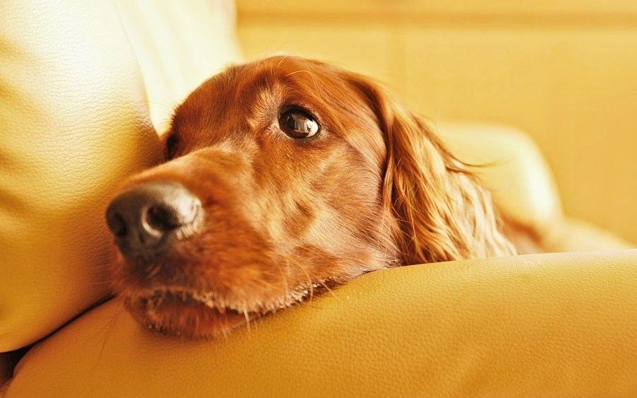 Стерилизация собак, плюсы и минусы - статьи про животных