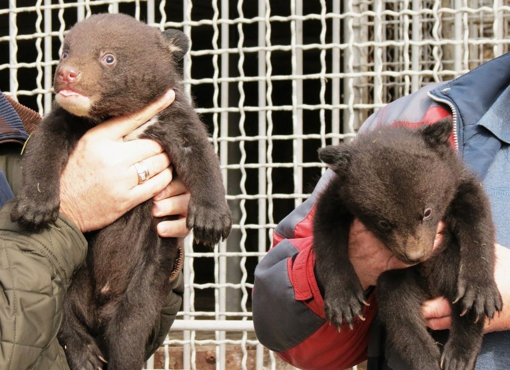 В бердянском зоопарке появились двое гималайских медвежат
