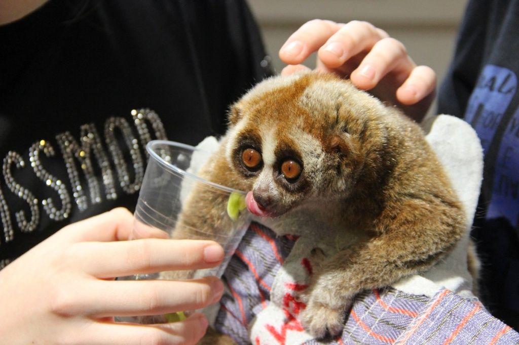 Робоча комісія виконкому перевірила Контактний зоопарк