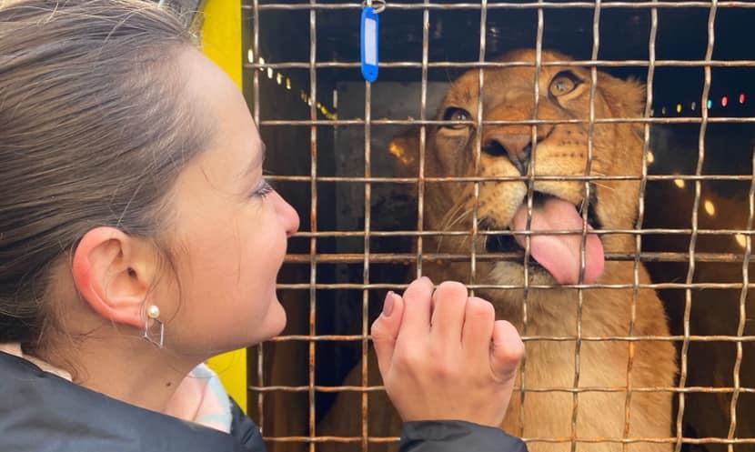 """Бердянський зоопарк """"Сафарі"""" відправив на волю п'ятьох левенят"""