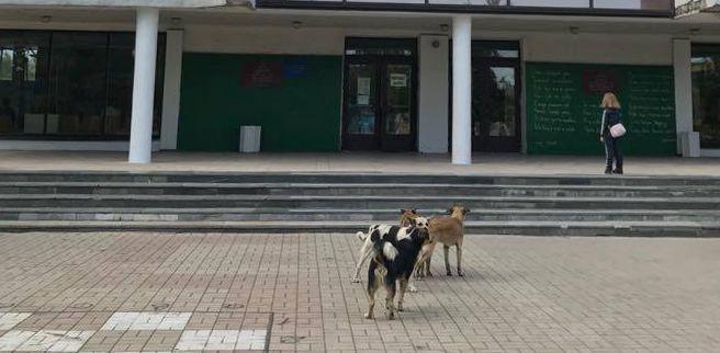 Міська влада знайшла варіант боротьби з безпритульними тваринами