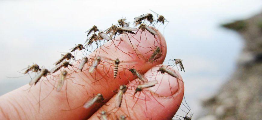 Нашестя комарів в Бердянську – через негоду. Депутати звинувачують владу - Новости Бердянска