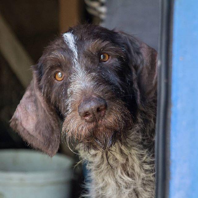 Собака перестрибнула через паркан і налякала господарку. В Бердянську штрафують за вигул тварини без намордника