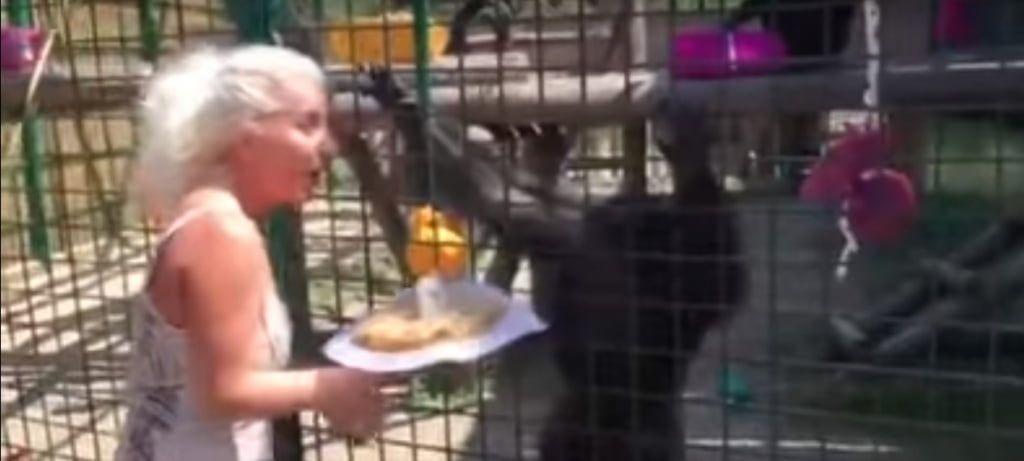 В бердянском зоопарке шимпанзе необычно поздравили с Днем рождения