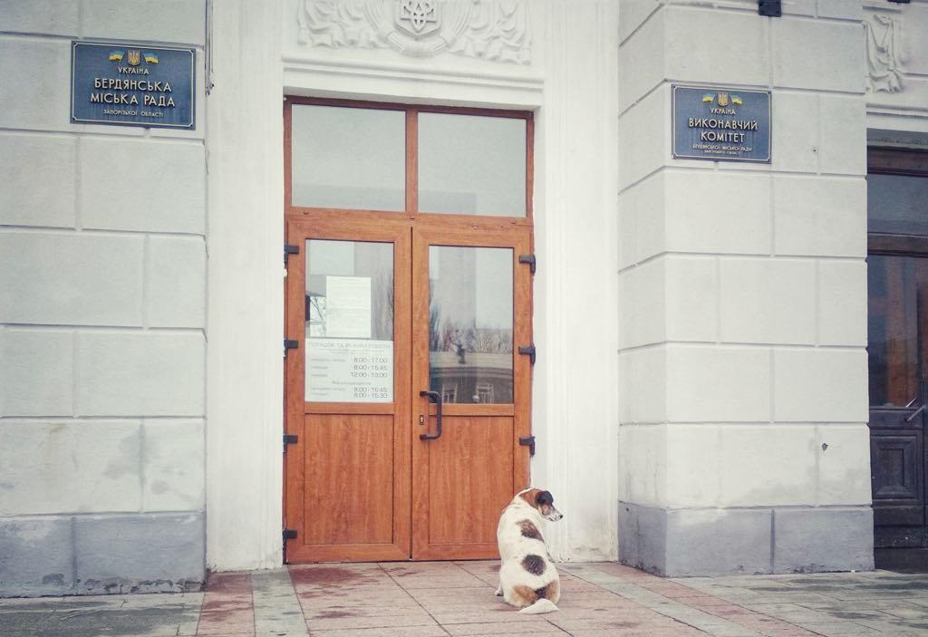 Комісія з питань ЖКГ рекомендуватиме виконкому розірвати угоду з харківською фірмою по вилову безпритульних тварин