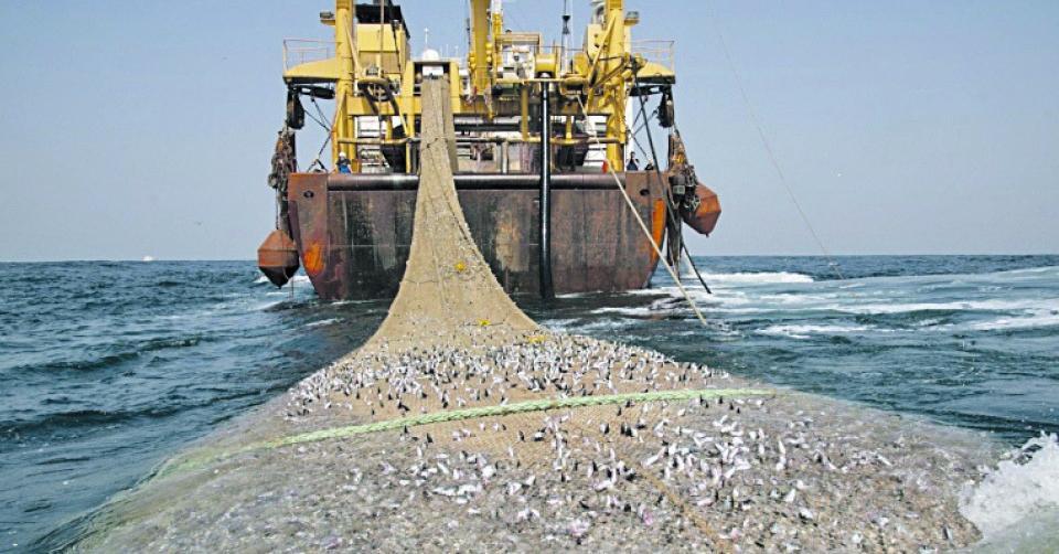 Вчені пропонують на 5 років припинити промисловий вилов риби в Азовському морі