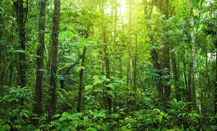 Більше мільйона на озеленення – восени в Бердянську обіцяють висадити півтори тисячі дерев та кущів
