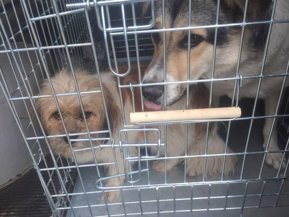 Сьогодні на закупівлях визначилися з безпритульними собаками і поточними ремонтами