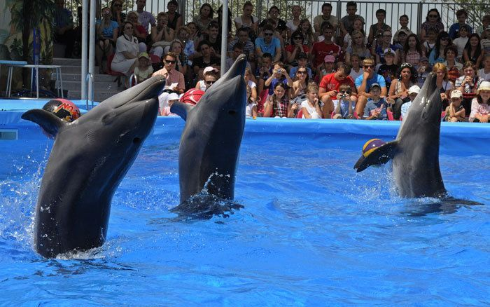 Дельфинарий открывает сезон 3 июня