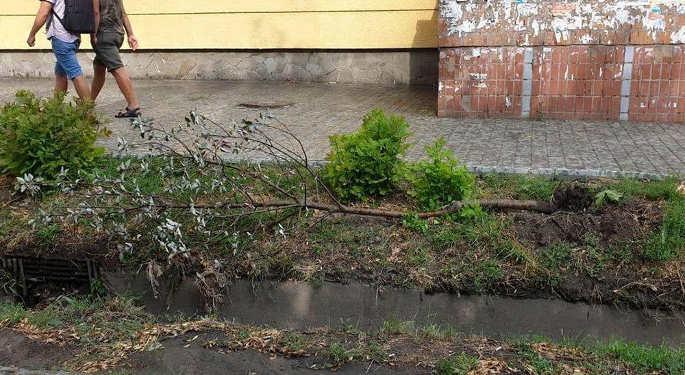 Недільний шторм не завдав шкоди Бердянську. По області 25 населених пунктів без світла