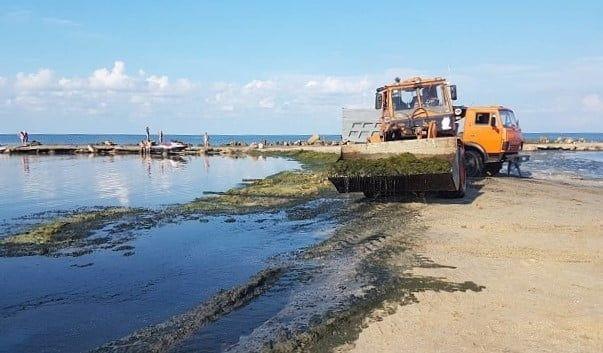 """О. Врублевський: """"Всю траву з пляжів наше підприємство вивезти не зможе"""""""