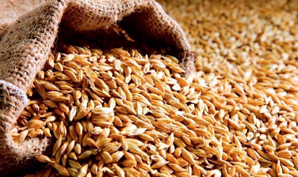 Успеют ли экспортеры продать зерно по выгодным ценам?