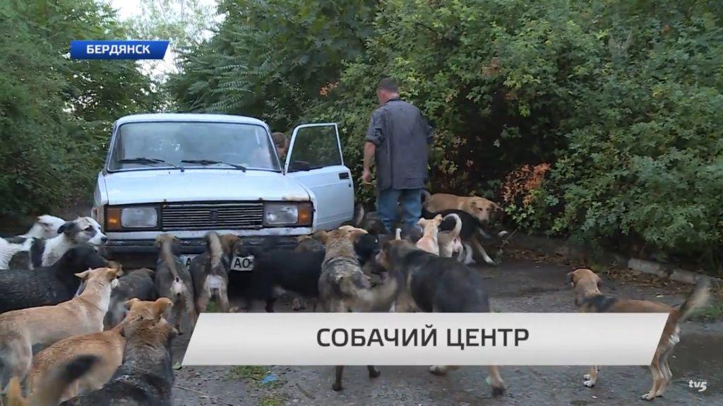 В Бердянске создан центр помощи бродячим животным