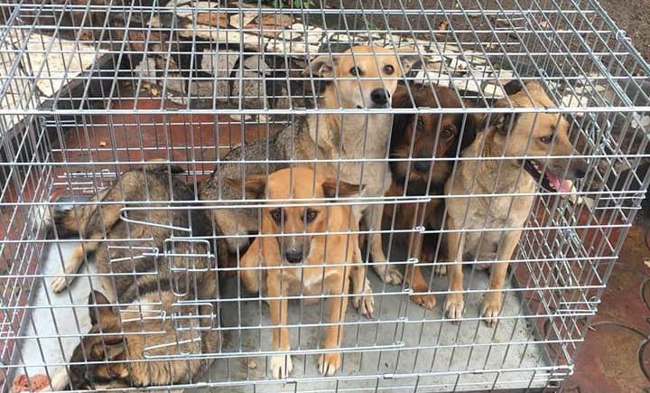 76 собак виловили в Бердянську в період з 6 по 10 серпня