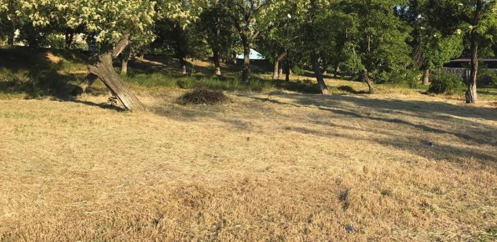 На утримання зелених насаджень в Бердянську виділено 4 мільйони гривень