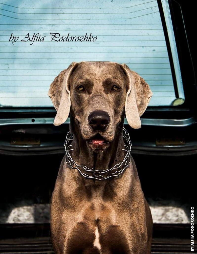 В Бердянске состоялась выставка охотничьих собак