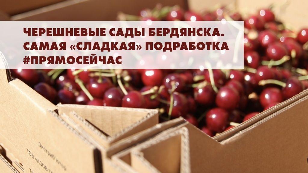 Черешневые сады Бердянска. Самая «сладкая» подработка #прямосейчас