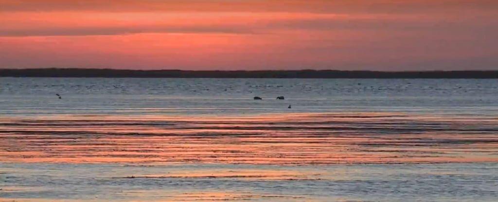 Акваторію Азовського моря оголосили заказником