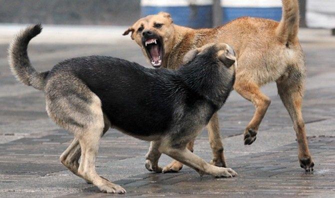 В Бердянске начнут отлавливать бродячих собак