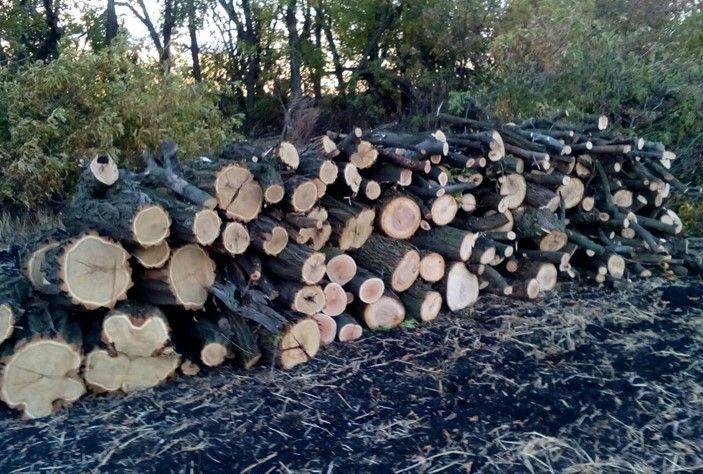 В районі незаконно вирубали 382 дерева