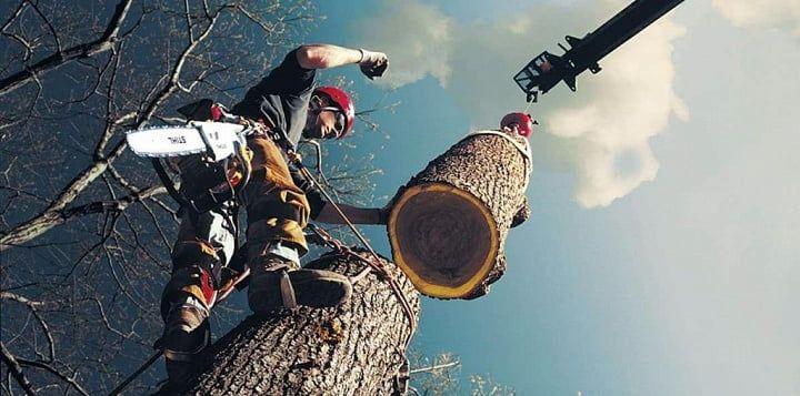 В мікрорайоні Скловолокно потребують знесення та обрізки 600 дерев