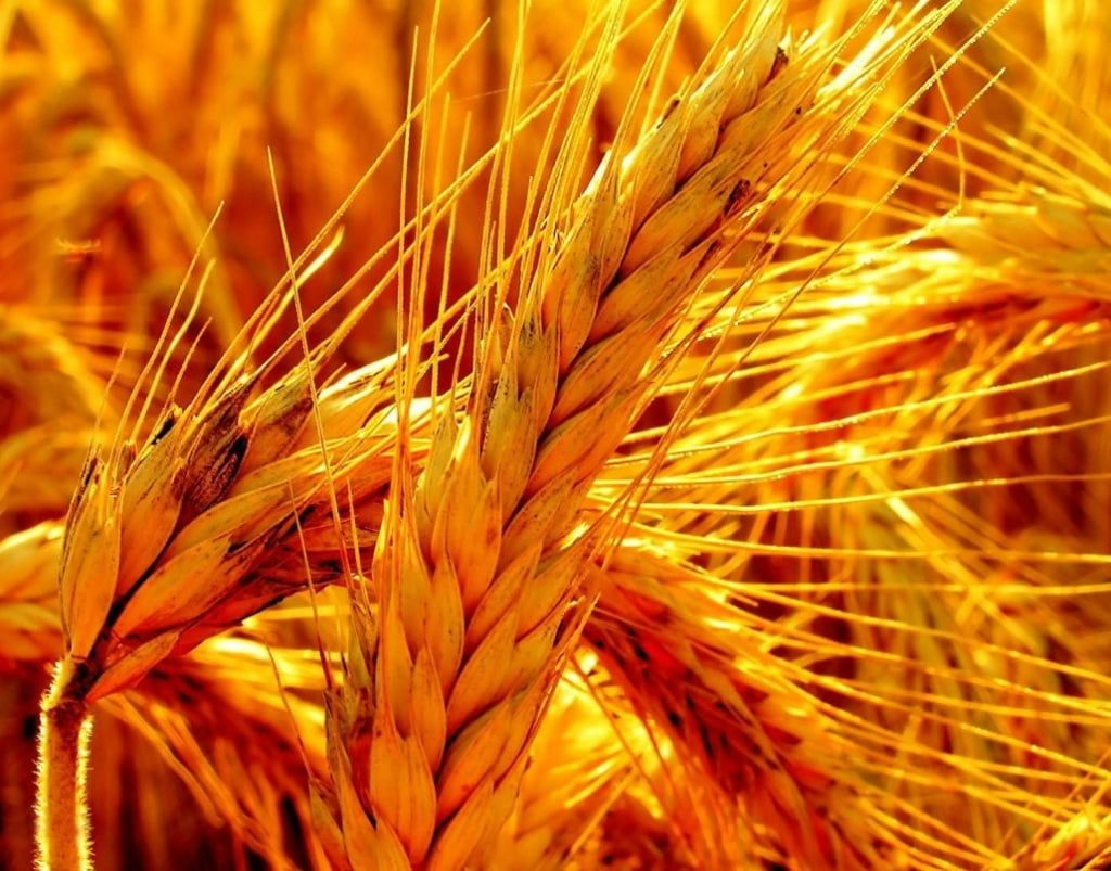 Госстат: Украина сократила экспорт товаров практически на8%