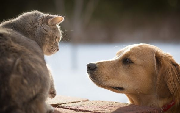 """""""Собака розірвала кішку"""" – сусідські війни ледь не завершились штрафом для лісівця"""
