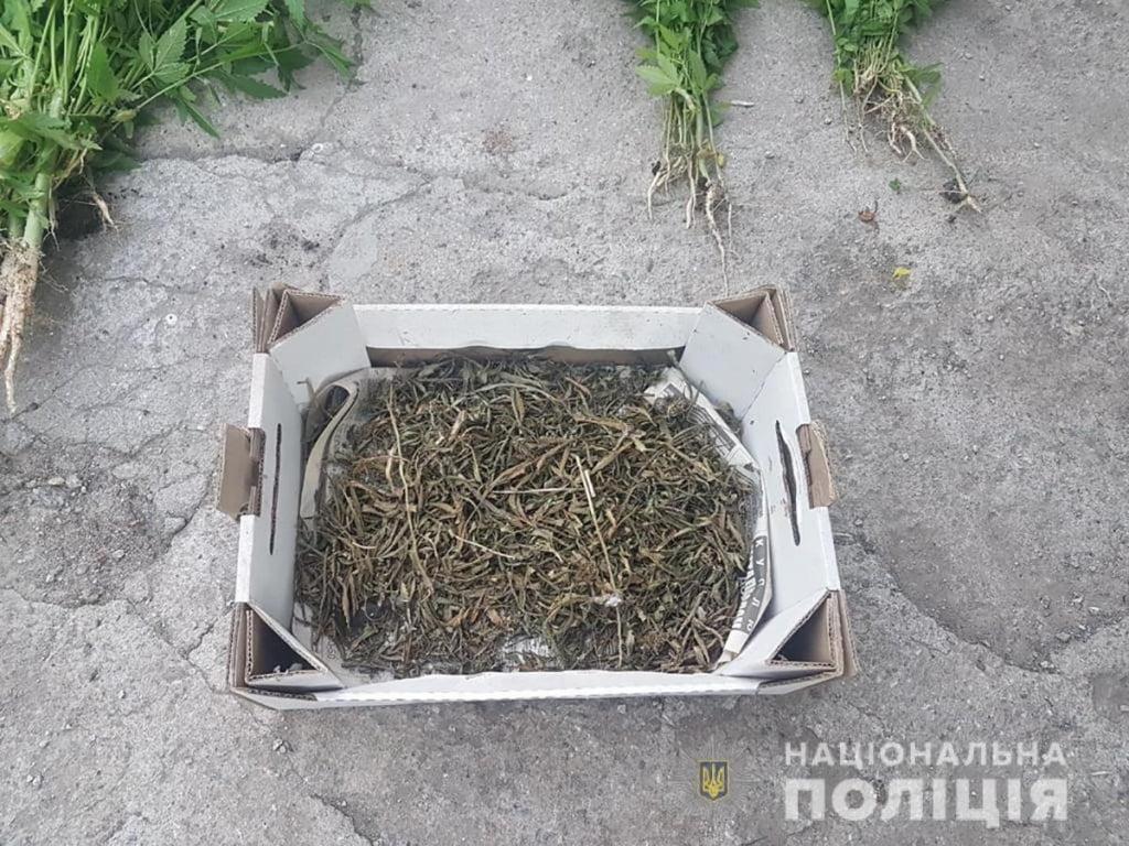В Бердянському районі правоохоронці виявили та вилучили понад 200 кущів нарковмісних рослин