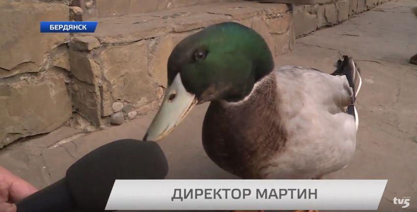 В торговом центре Бердянска поселился селезень - видео