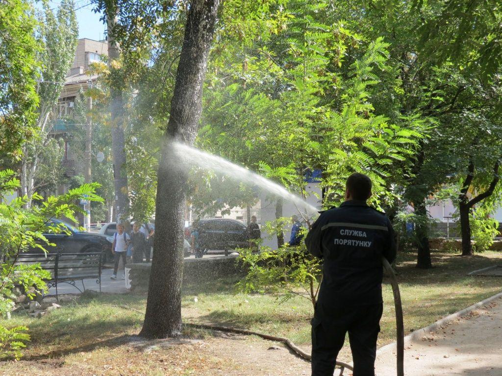 Міська влада продовжує шукати дієві методи очищення дерев від червеця