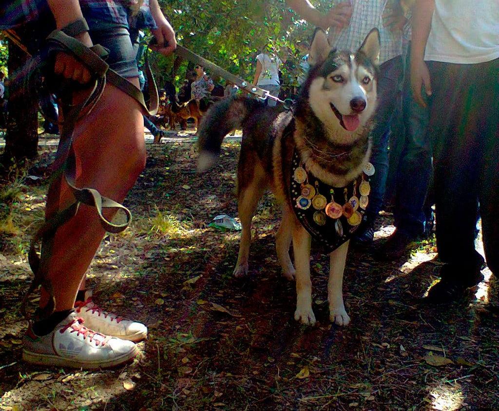 В Бердянске прошла выставка собак